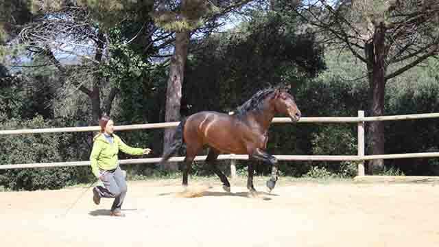 Conexion con el caballo