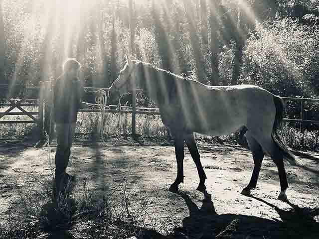 Consejos para educar a un caballo