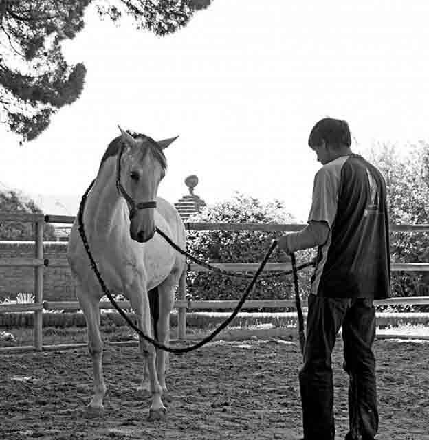 Educar a un caballo