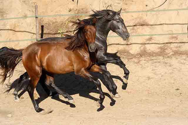 El caballo no nace para ser montado