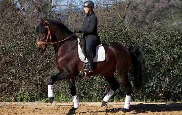 El método Alexandre en caballos