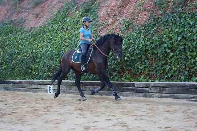 El motor del caballo son los pies y las manos son la direccion
