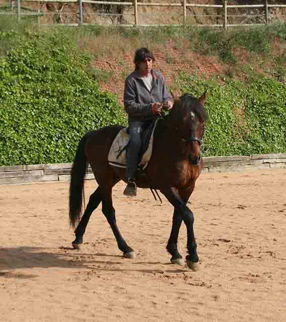 Estres en un caballo