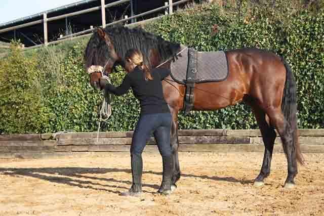 La conciencia corporal sobre el caballo tiene su origen en las artes marciales