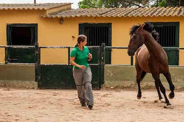 conciencia corporal del jinete sin caballo