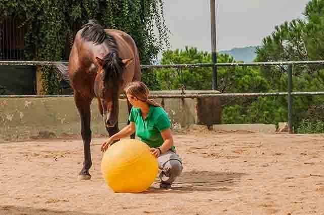 pie a tierra con el caballo
