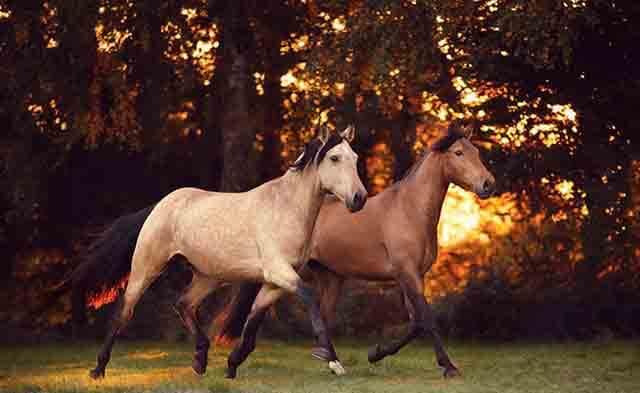 Coherencia cardiaca de los caballos