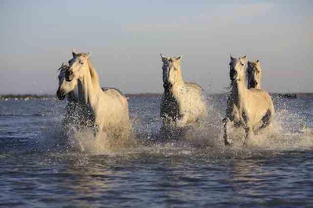 La máxima de un caballo es estar bien