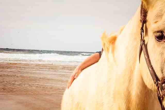 Qué es Holistic Being with Horses
