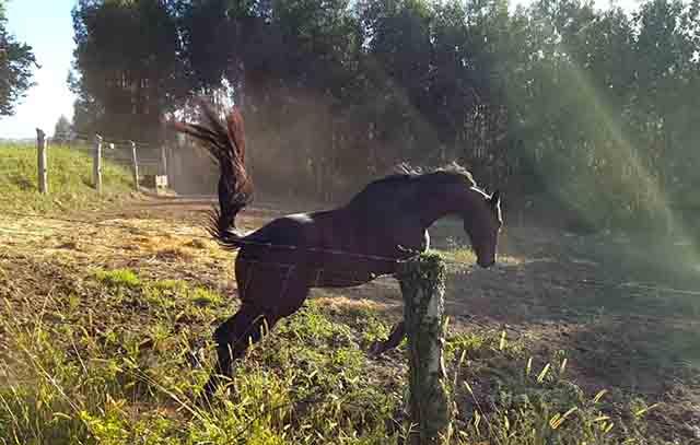 Mobix es un caballo muy potente