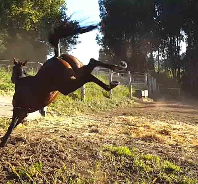 Mobix se enfrenta a la carrera de caballos de Ribadesella