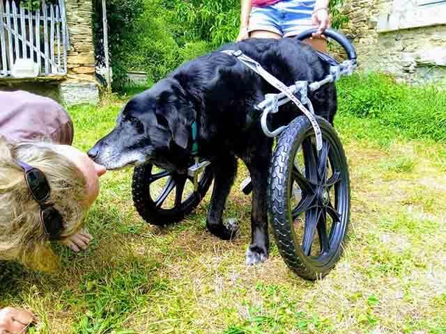 AEFA es la Asociación de fisioterapia animal española