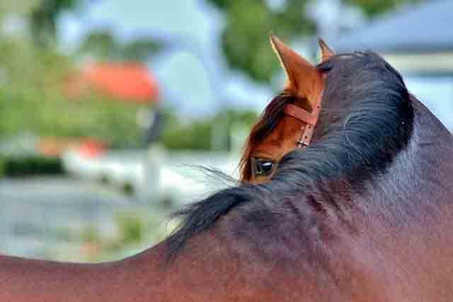Fisioterapia en caballos España
