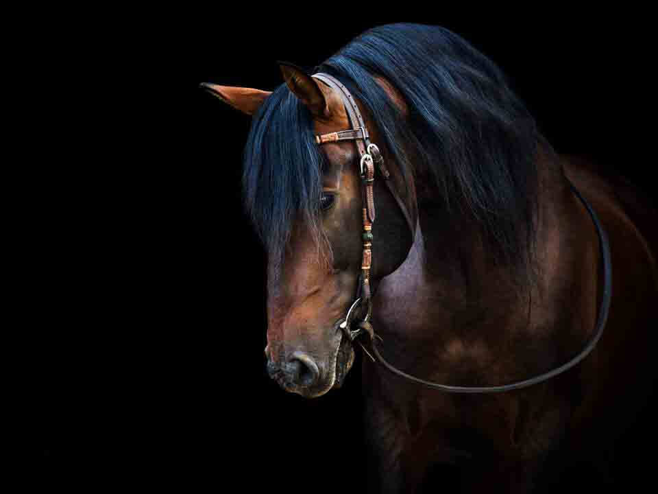 Fisioterapia en caballos