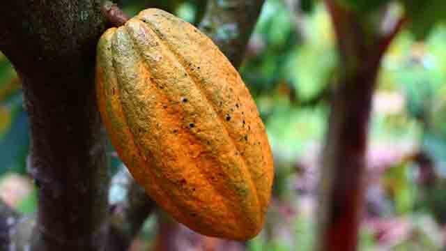 La adiccion al cacao es un sintoma de falta de magnesio