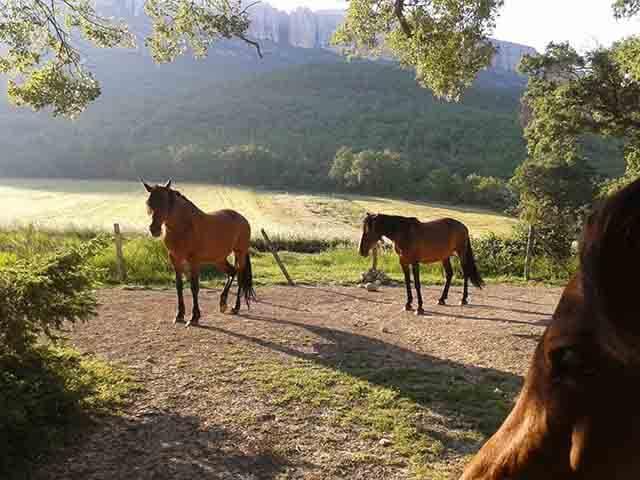 Los caballos necesitan pasto fresco