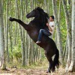 Santi Serra entrenador profesional de caballos