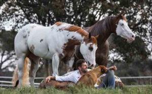 Santi Serra y su relación con los caballos