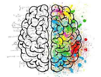 Mindfulness plasticidad del cerebro